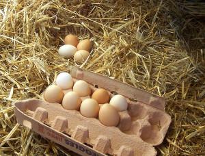 ei-genwijs eieren in doos